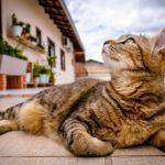 猫のスピリチュアルパワー!こんな行動を見たら幸運のサイン?