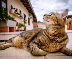 スピリチュアル サイン 猫