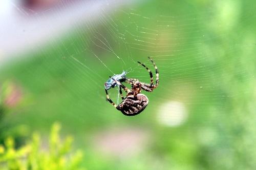 スピリチュアル 蜘蛛 夢