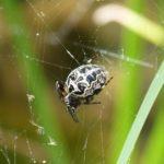 メッセージマスター!蜘蛛が表すスピリチュアルな意味とは