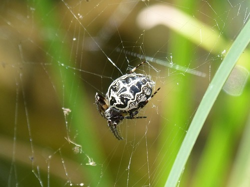 スピリチュアル 意味 蜘蛛
