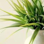 スピリチュアルで見る植物が持つ浄化エネルギーとは!?
