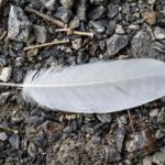 白い羽根は天使の羽根!?スピリチュアルなサインとは?