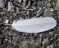 スピリチュアル 天使 羽根
