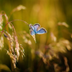 青い蝶々が持つスピリチュアルな意味とは!?