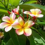 ハワイアンスピリチュアルタロットカードの意味を説明!