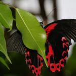 不吉な予兆!?黒い蝶を見るスピリチュアルな意味とは!?
