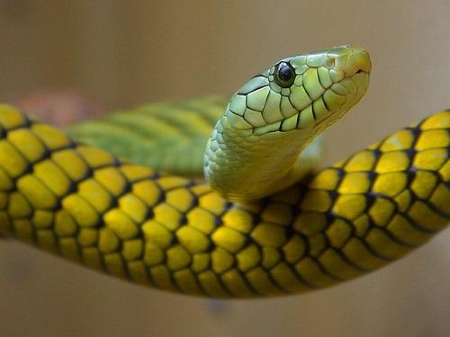 スピリチュアル 蛇 見る
