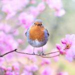 鳥の鳴き声のスピリチュアルの意味はパワーとは?