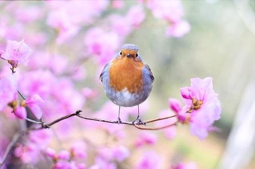 スピリチュアル 鳥 鳴き声