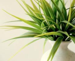 スピリチュアル 植物 浄化