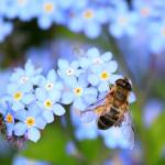 蜂のスピリチュアルでの意味とは?