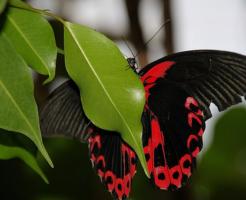 スピリチュアル 黒 蝶