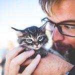 スピリチュアルで見る猫好きな人の特徴や心理とは?