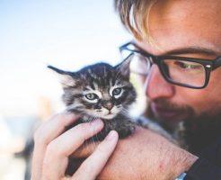 スピリチュアル 猫 好き