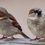 スズメのスピリチュアル的な意味について