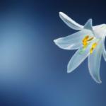 花のスピリチュアルな意味やパワーとは!?