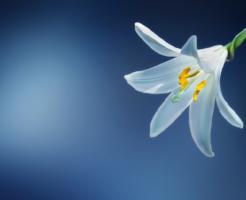 スピリチュアル 花 意味